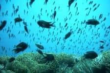 Seashell divers